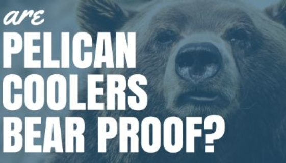 Are Pelican Coolers Bear Proof?