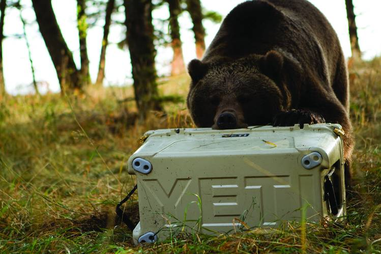 Yeti Cooler Bear Proof