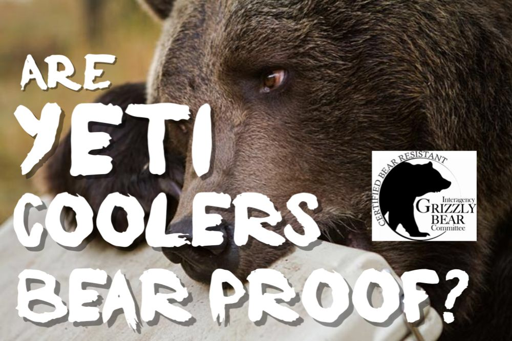 Are Yeti Coolers Bear Proof? Plus How Are They Tested