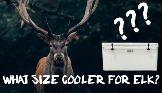 What Size Cooler For Elk?