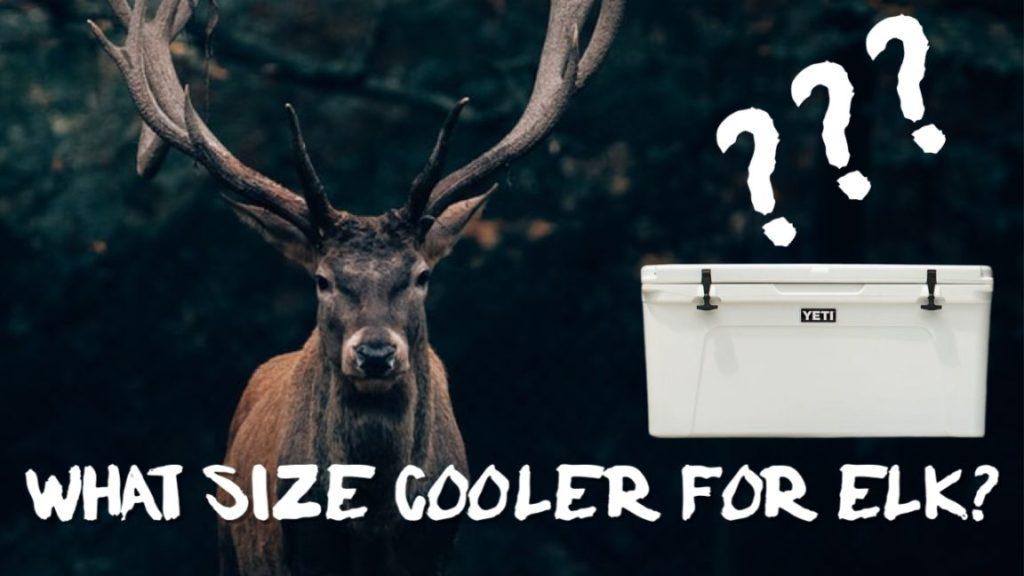 What Size Cooler For Elk?